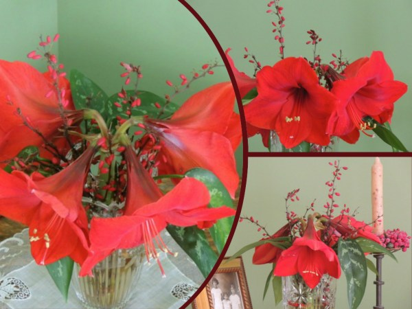 red amaryllis collage2