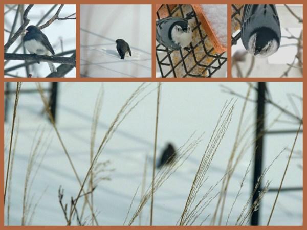 critters feb 15