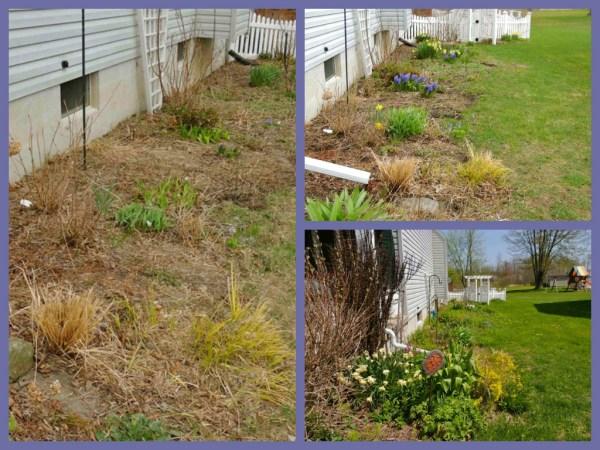 side garden early spring