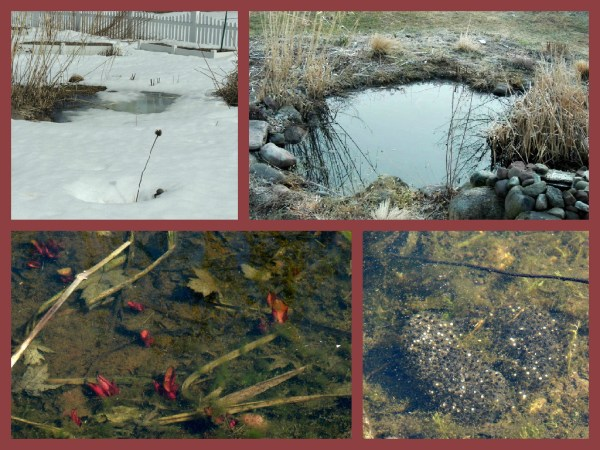 pond collage