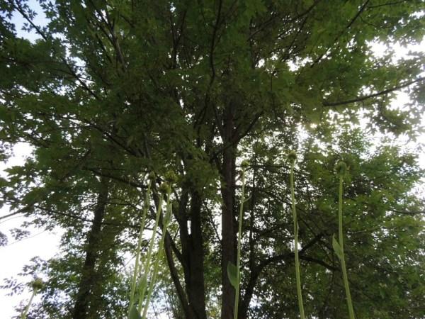 arch garden trees