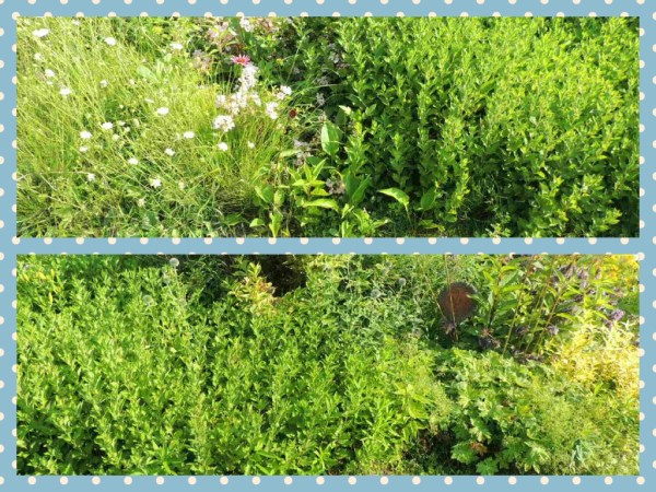 front bush side