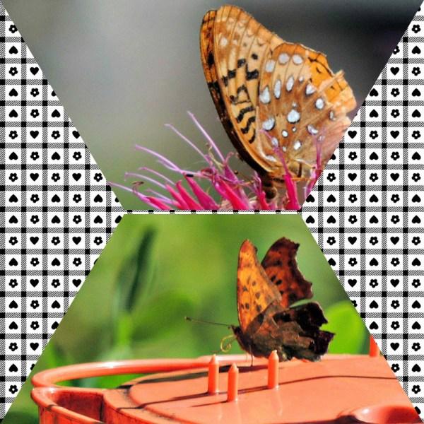 july flutters