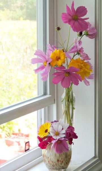 cosmos marigold vase