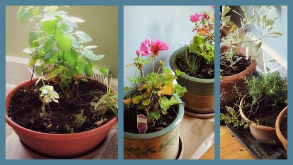 indoor herbs collage