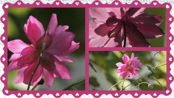 anemone collage