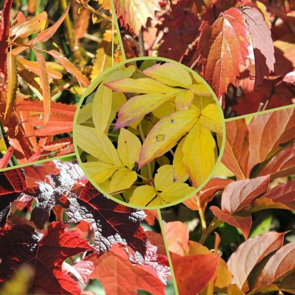 fall foliage collage