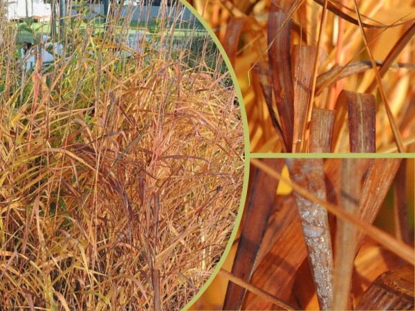 fall grass collage