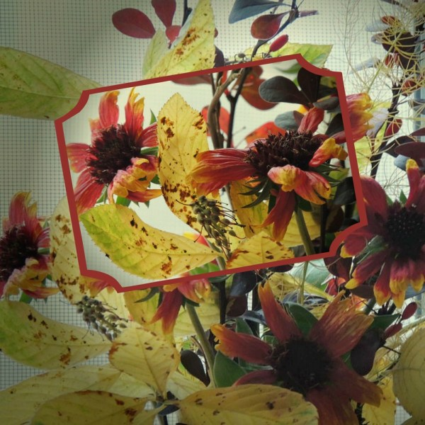 gaillardia vase collage