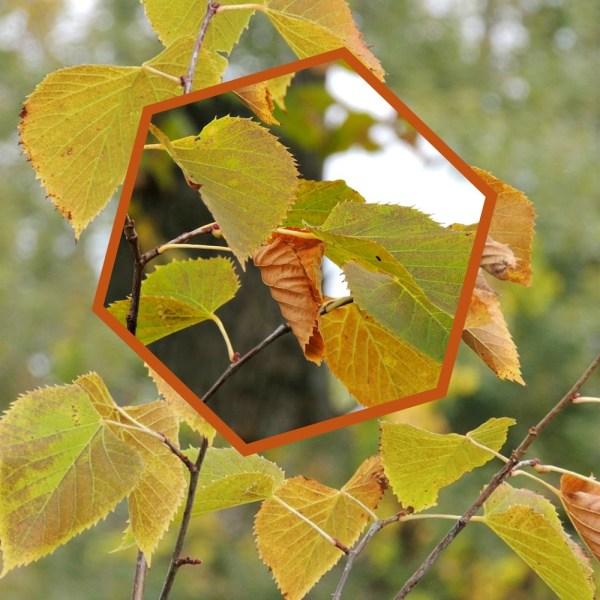 late sept leaves