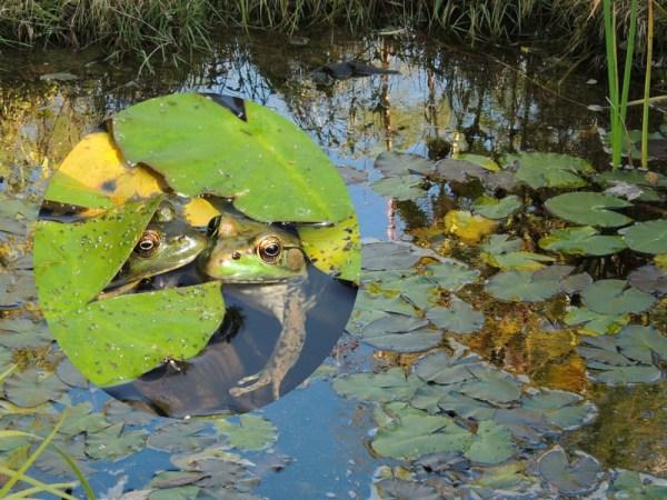 oct pond collage