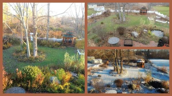 back garden nov