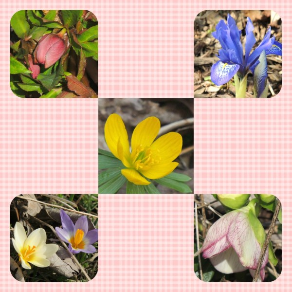 first spring bloom collage