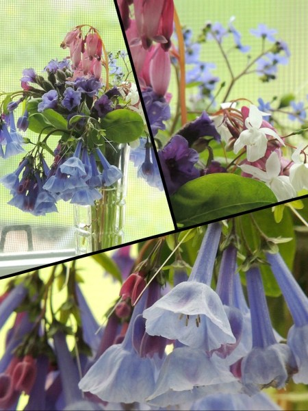 bluebells vase collage