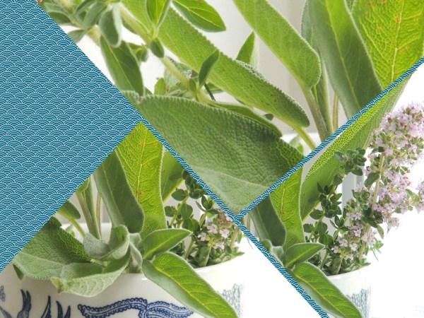 herb vase