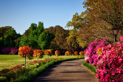 garden path with trees and shrubs