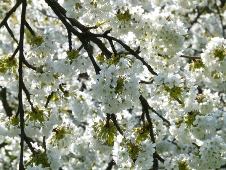 blossoms on a tree