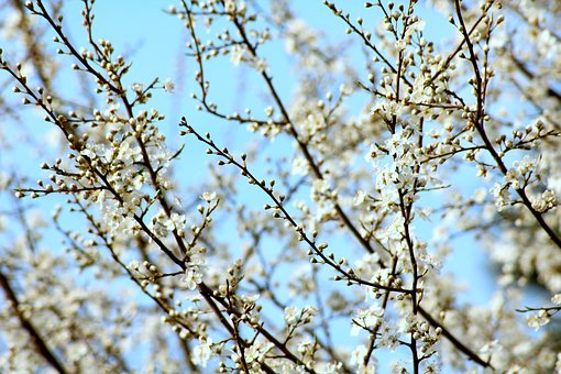 flowering branches on a tree