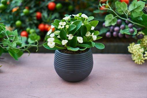 house plant on the windowsill