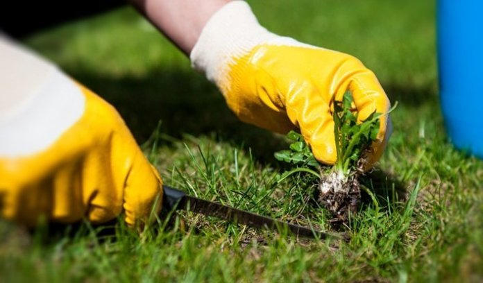 Controlling Weeds Without Nasty Chemicals