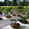 Craft A Beautiful Bonsai Nursery with These 5 Pointers!