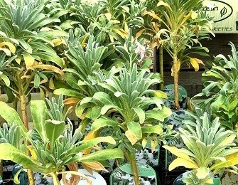 Native Plants Nursery