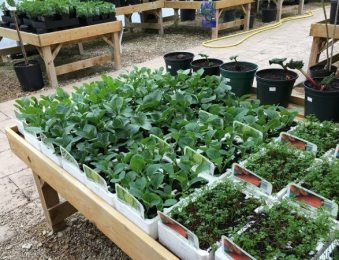Plant Nursery – Grow Your Plants In A Controlled Environment