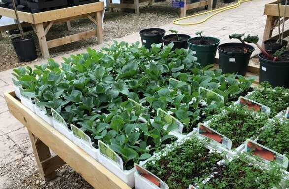 Plant Nursery – To Grow Your Plants In A Controlled Environment