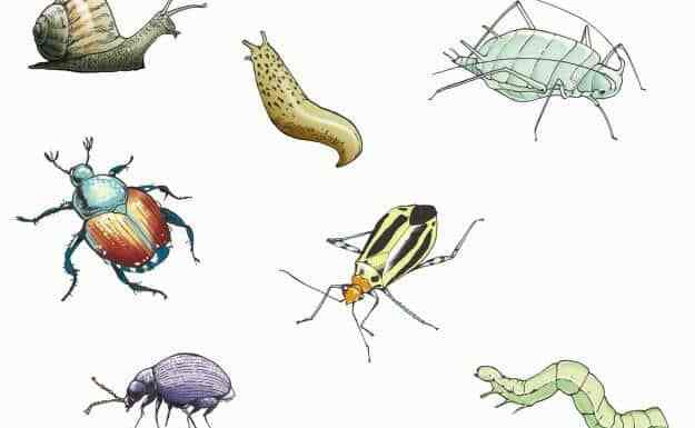 Garden Pests Devouring Your Growing Plants