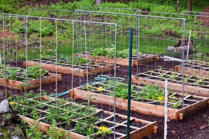 Best Gardening Tips For Successful Raised Bed Garden