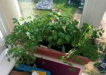 Guide to Growing Herbs