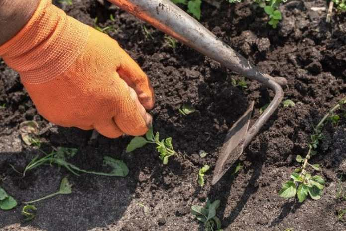 Weed Control Methods in your Garden?