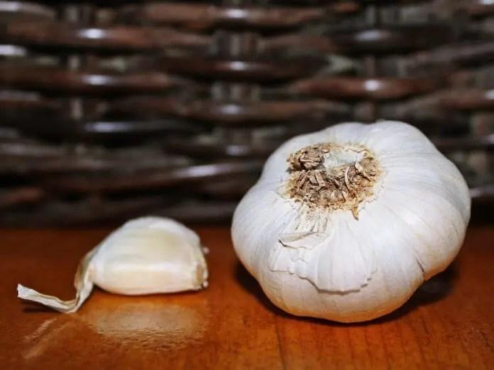 Planting and Harvesting Garlic