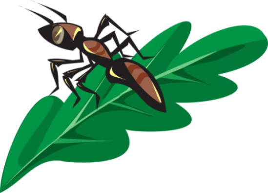 All About How to Handle Home Garden Ants