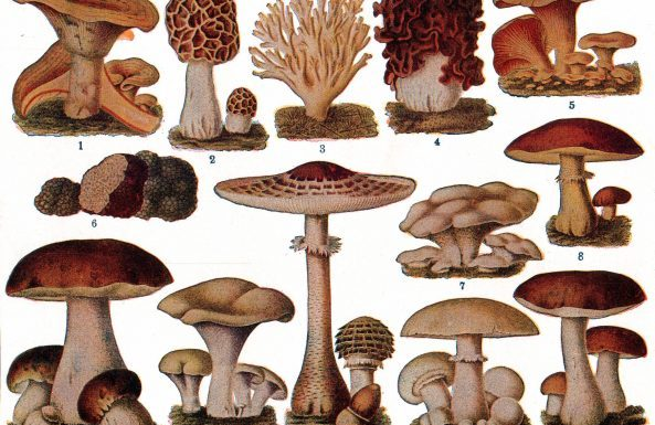Complete Guide of Some Different Types of Mushrooms