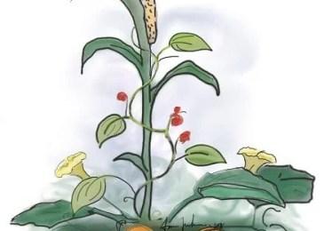 FAQ companion planting technique