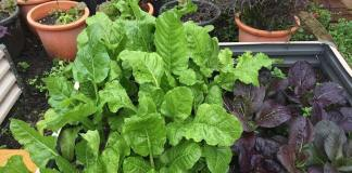 How to Plant Your First Organic Garden