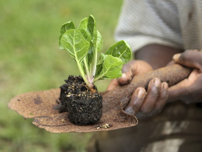 Organic Plant Nutrition – Nature's Way