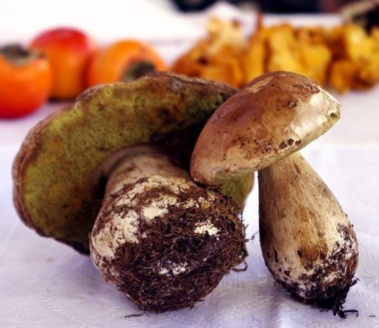 All About Type of Mushrooms and How to Grow