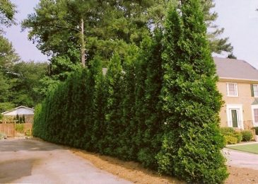 Windbreaks and Shade Trees save Energy, Money, and the Environment