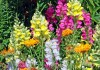 Guide for Beautiful annual flowers in Garden