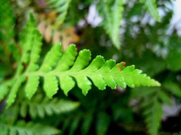 Complete Guide to Growing Fern in Garden Home