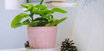 Indoor Gardening – Best Complete Guide