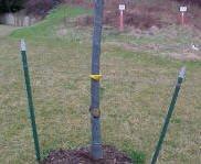 tree_staking