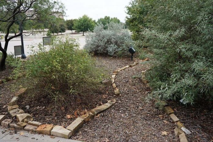 All About Xeriscape and Xeriscaping