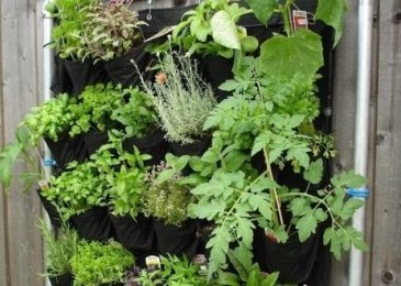 Complete Guide on Vertical Gardening