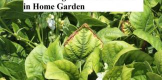 Controlling Diseases and Pests in Home Garden