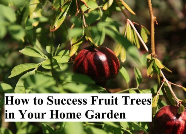 How to Success Fruit Trees in Your Home Garden