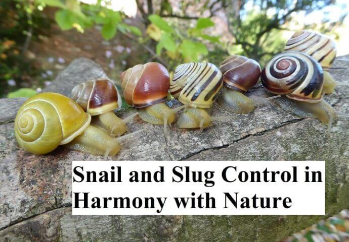 Snail and Slug Control in Harmony with Nature