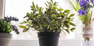 Move Tender Plants Indoors